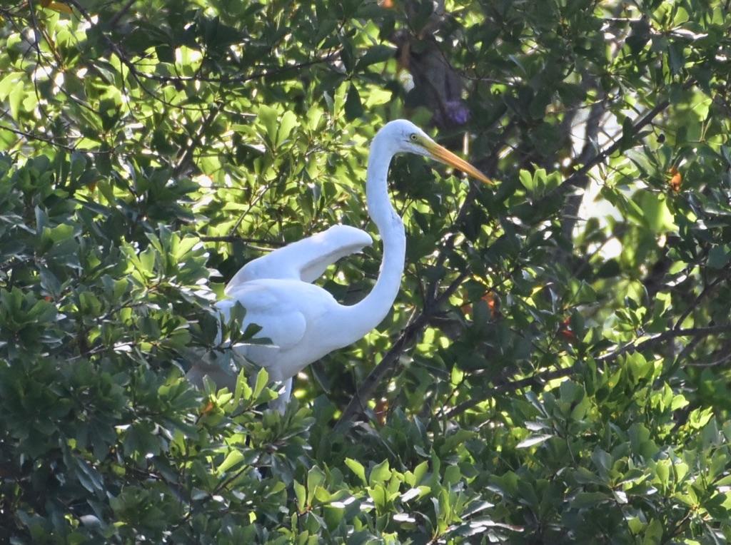 egret - 2