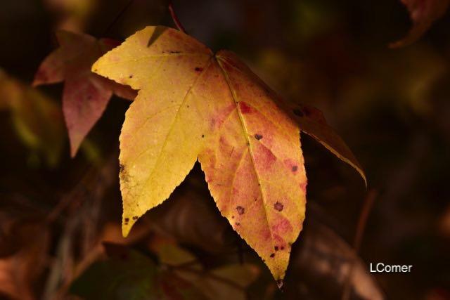 leaves-5-1