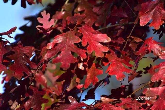 leaves-2-1