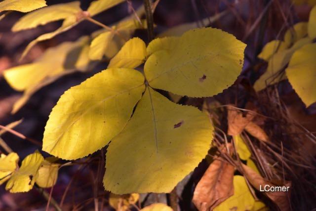 leaves-4-1