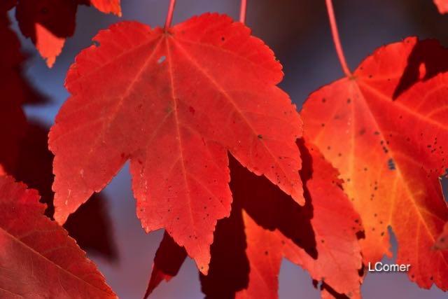 leaves-6-1