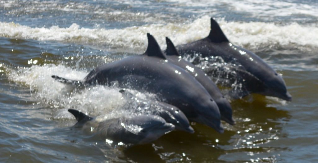 Cold Mil Dolphin Cruise
